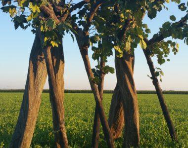 "Stelzenäufer ""Living Trees"""