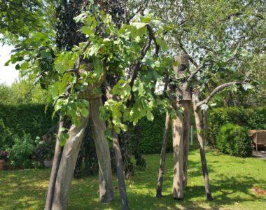 """Stelzen """"Living Trees"""""""