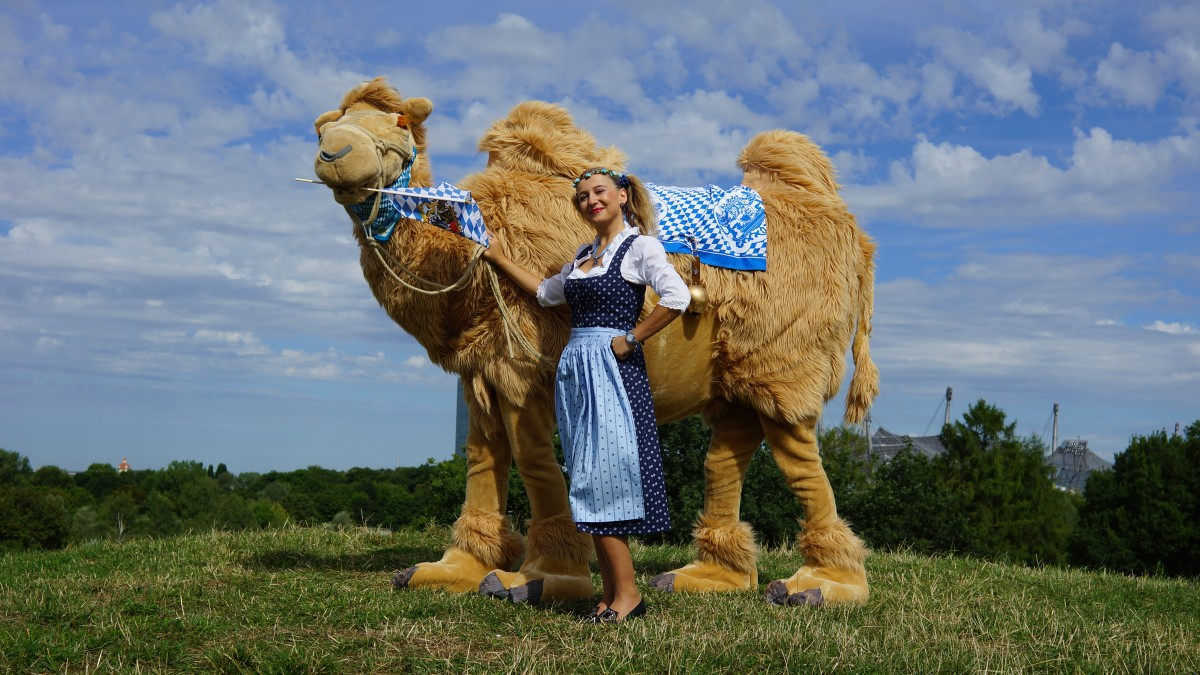 Bayerisches Walkact Kamel